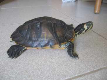 Cercare annunci tartarughe italia pagina 4 for Acquario tartarughe vendita