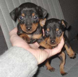 Siti di annunci gratuiti per animali for Nomi per cagnolini di piccola taglia