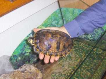 Cercare annunci tartarughe italia pagina 3 for Acquario tartarughe prezzo