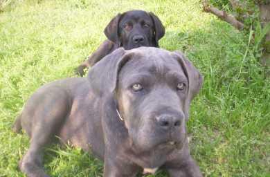 Cercare annunci cani user ref anni - Cane occhi azzurri ...
