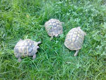 Cercare annunci tartarughe italia pagina 2 for Prezzo tartarughe