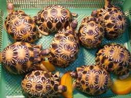 Cercare annunci tartarughe italia for Letargo tartarughe acqua