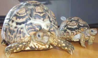 Cercare annunci tartarughe italia for Terrario per tartarughe acquatiche