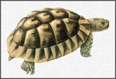 Cercare annunci tartarughe italia pagina 5 for Tartaruga di terra maschio o femmina